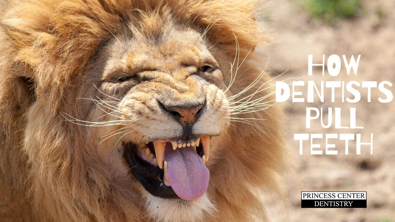 A lion with enormous teeth